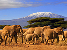 Kenya: Elephants in Kenya / Mount Kilimanjaro in Tanzania