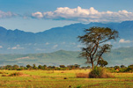 Queen Elizabeth National Park and the Rwenzori Mountains